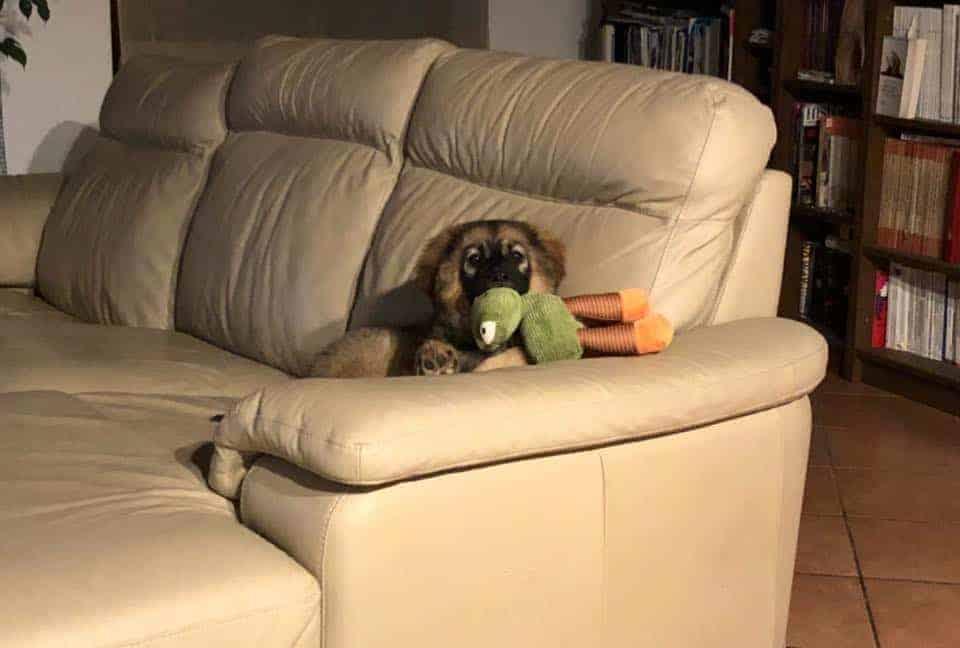 Concetta conquista il divano