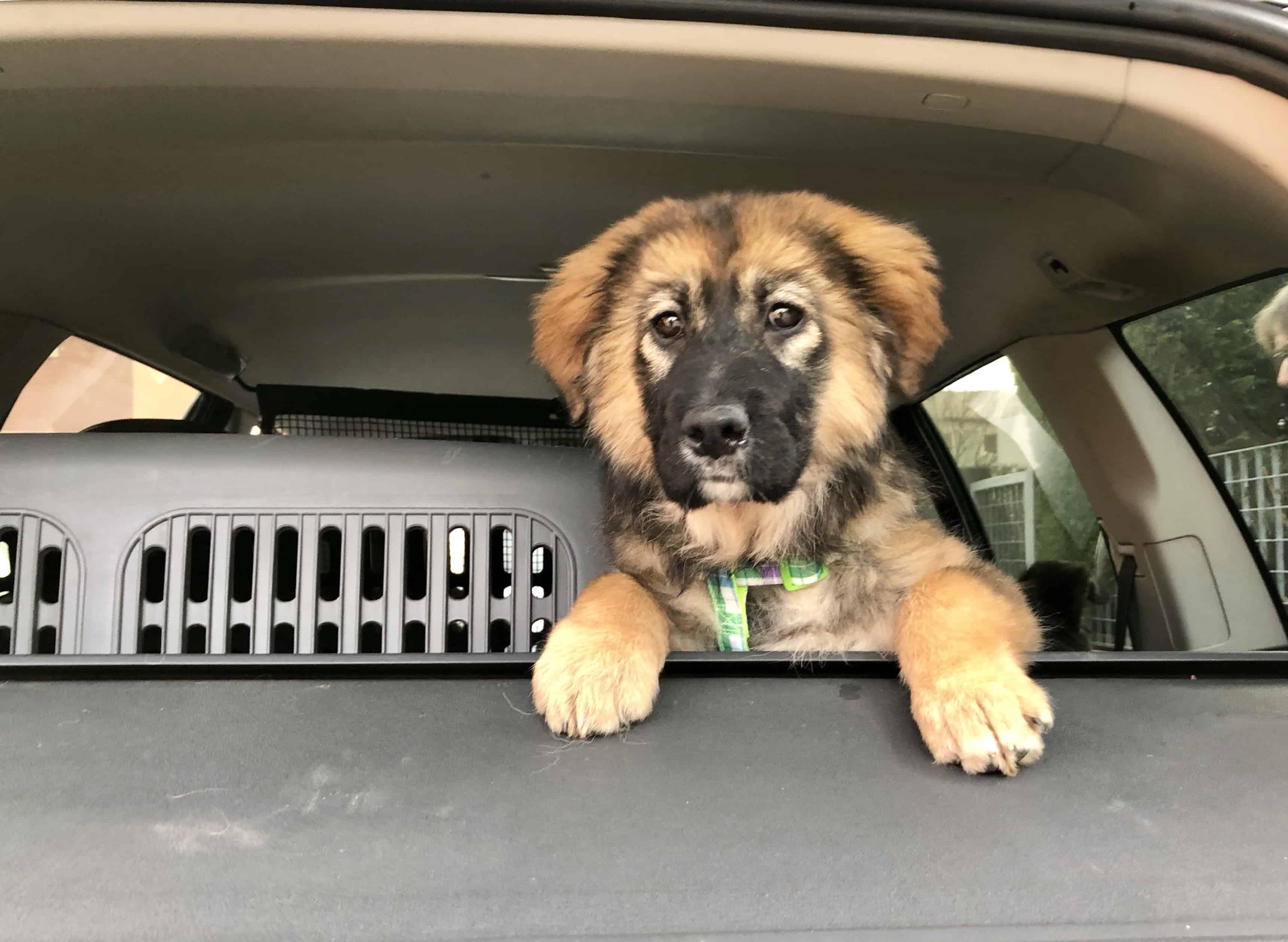 Concetta in macchina