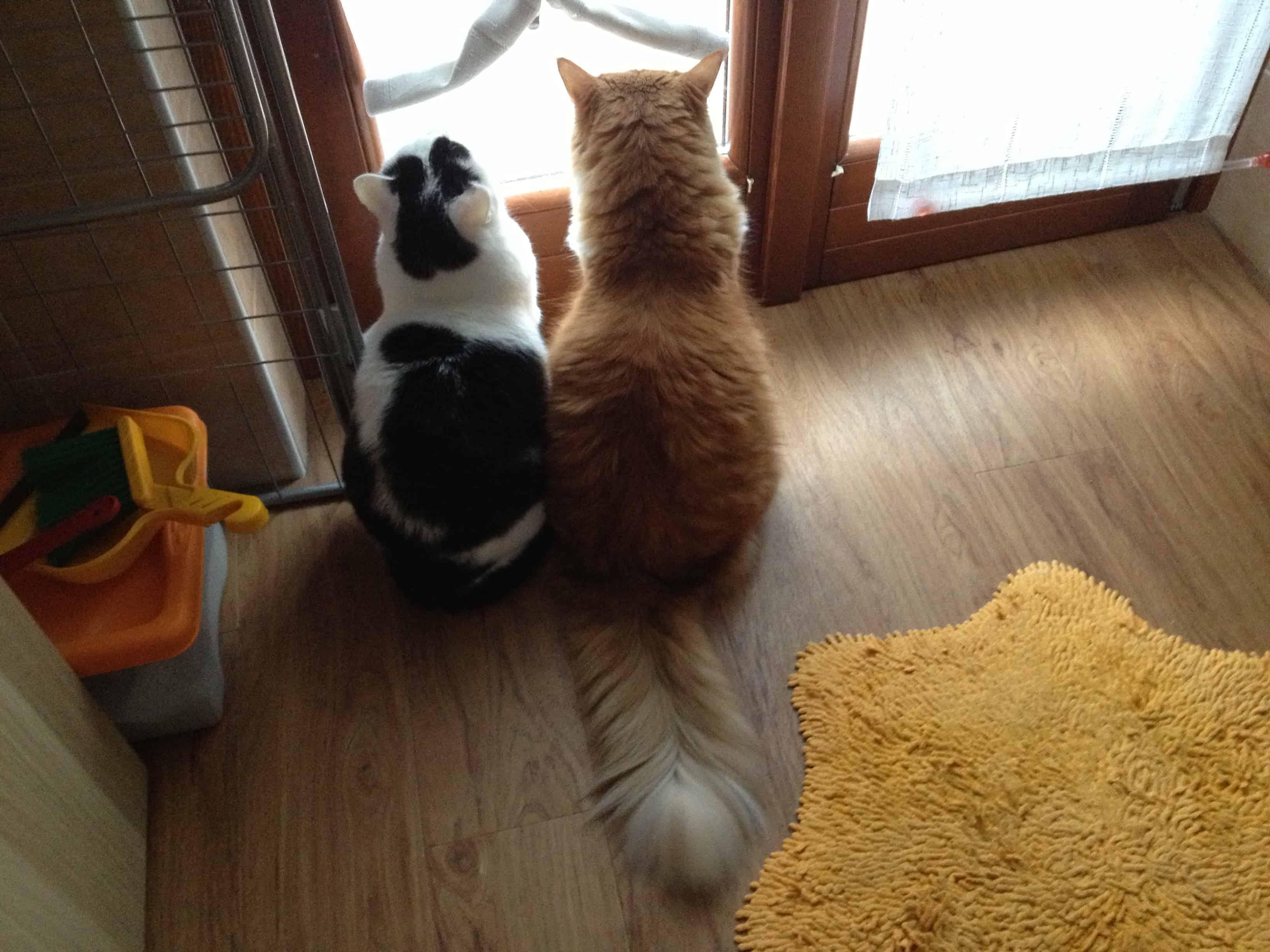 Anita e Ginger alla finestra