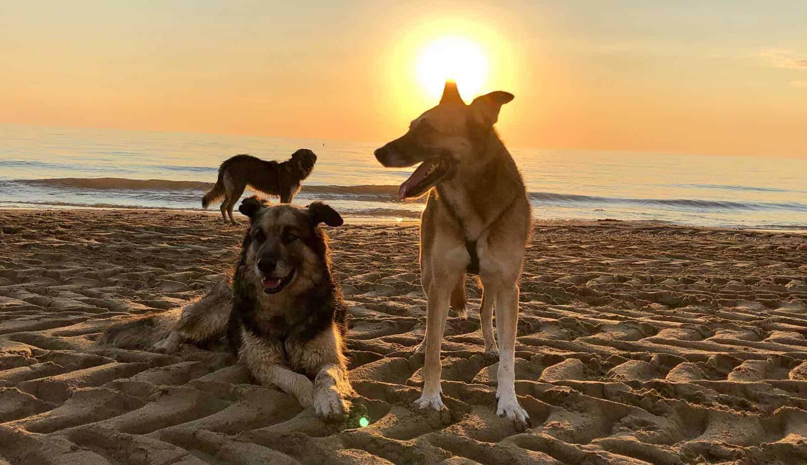 I tre cani al tramonto in spiaggia