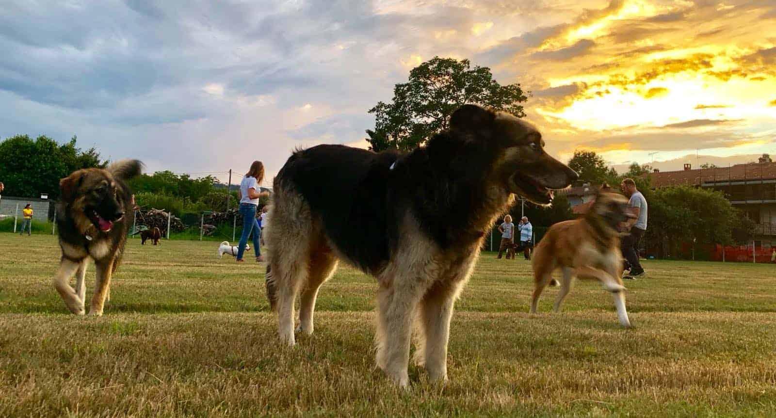 I tre cani al tramonto