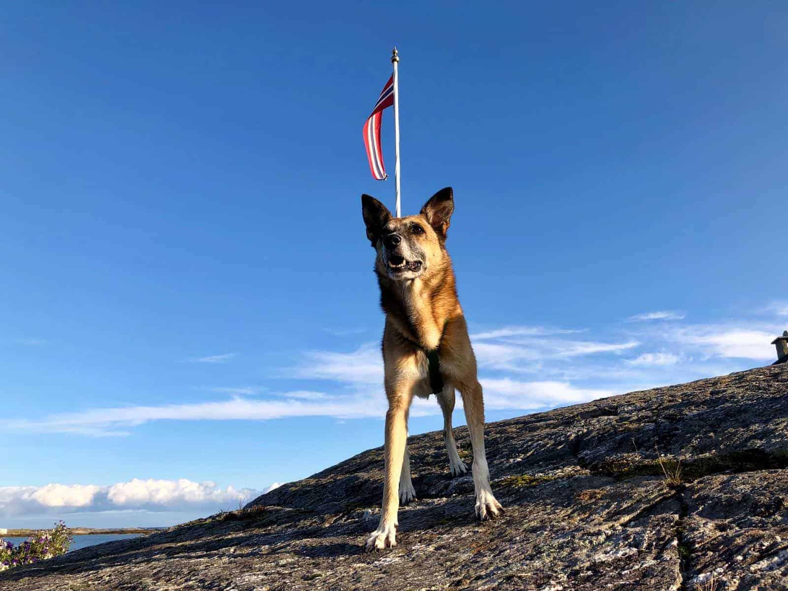 Bartina conquista la Norvegia