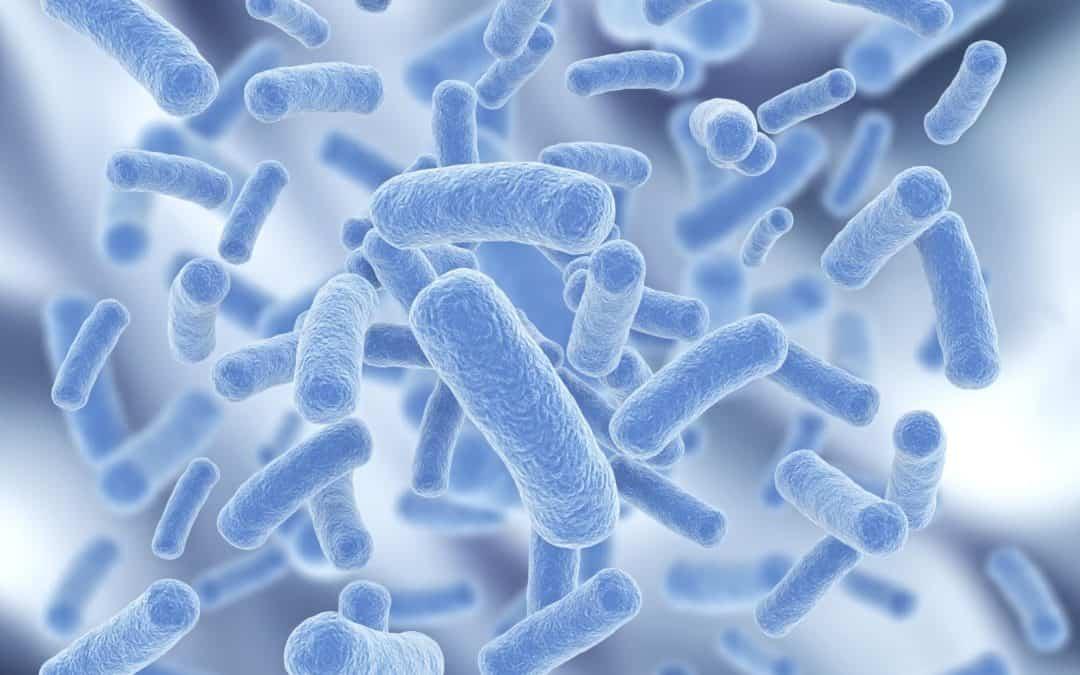 microbioma intestinale cane