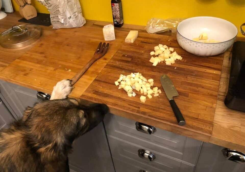 Cane che curiosa in cucina
